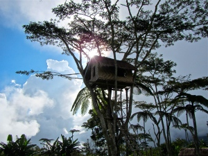 Tree house at Naduri