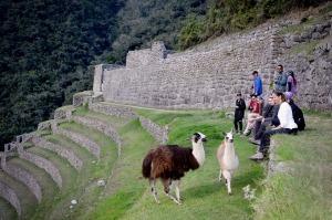 Hangin' with the llamas