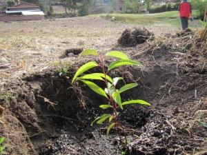 Planting the future.