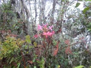 Winaywayna Orchid